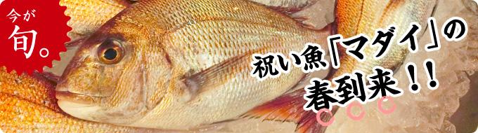 今が旬。祝い魚「マダイ」の春到来!!